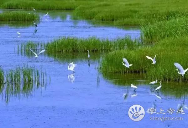应城老观湖国家湿地公园好玩吗?老观湖国家湿地公园怎么样?