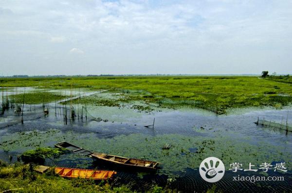 生机盎然的观鸟景点 就在孝感的老观湖国家湿地公园