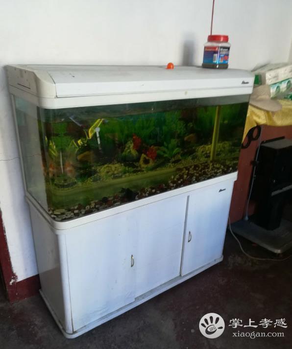 八成新观赏鱼缸 600元转让