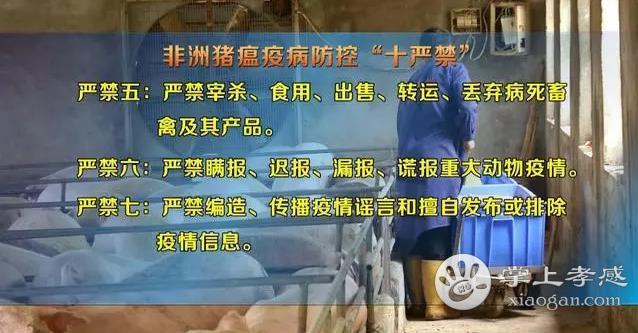 猪瘟疫情相继发生!湖北发布十严禁的行为公告!孝感养猪者注意![图2]