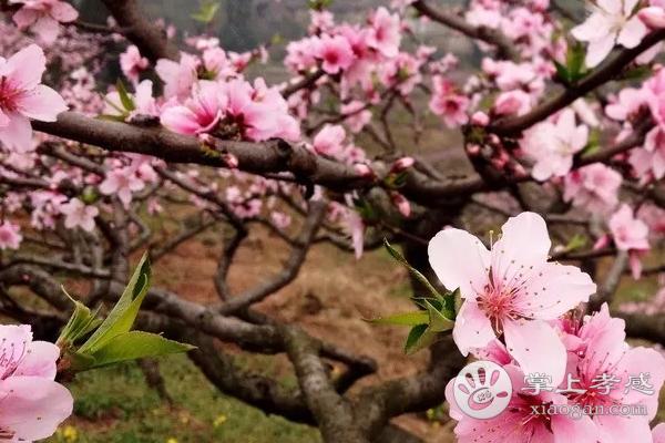 应城龙池山庄有什么花可以欣赏呢?应城龙池山庄花海景观介绍![图2]