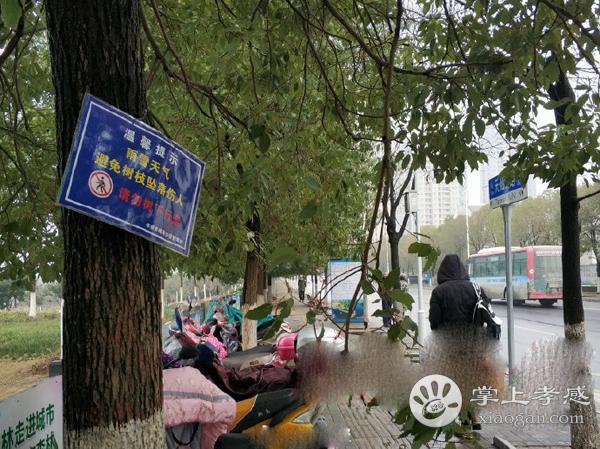 雨雪天气持续导致天仙路树枝断裂 行人出行需注意![图2]