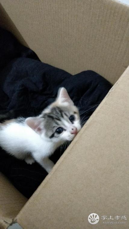 免费领养招财猫啦,4只小奶猫等你带回家