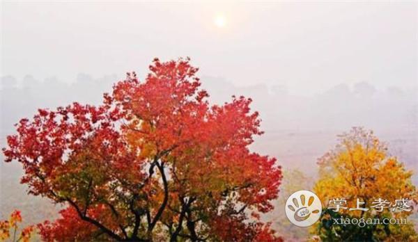 深秋,大悟彭店水库的红叶美景你不可错过!