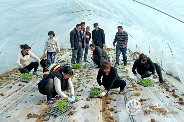 安陆30万斤扶贫蔬菜俏销哈尔滨[图1]