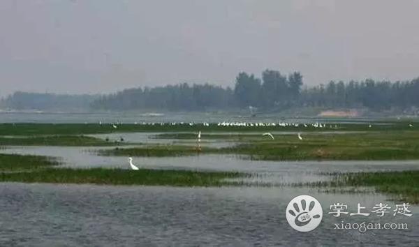 安陆府河国家湿地公园八景有哪些?府河八景分别有哪些景观?