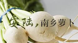 安陆南乡萝卜