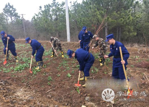 安陸市消防大隊開展植樹活動[圖1]