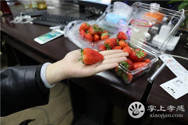 孝感摘草莓必去之地-麦青园,个个香甜可口,去了绝对不会后悔!