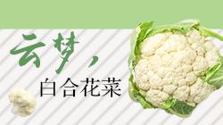 云梦白合花菜