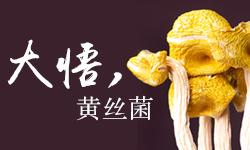 大悟黄丝菌