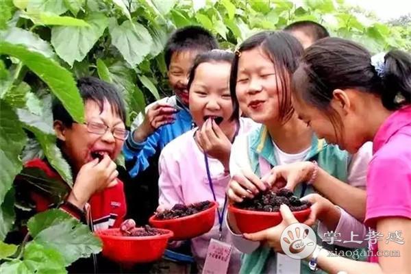 安陆一年四季可以采摘哪些水果?安陆一年四季采摘水果攻略汇总[图2]