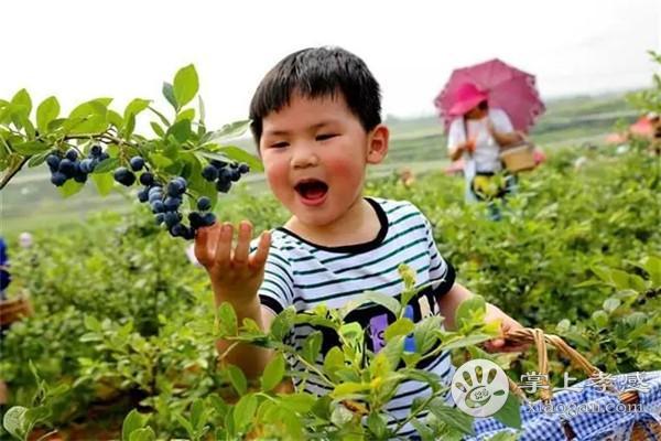 安陆一年四季可以采摘哪些水果?安陆一年四季采摘水果攻略汇总[图3]