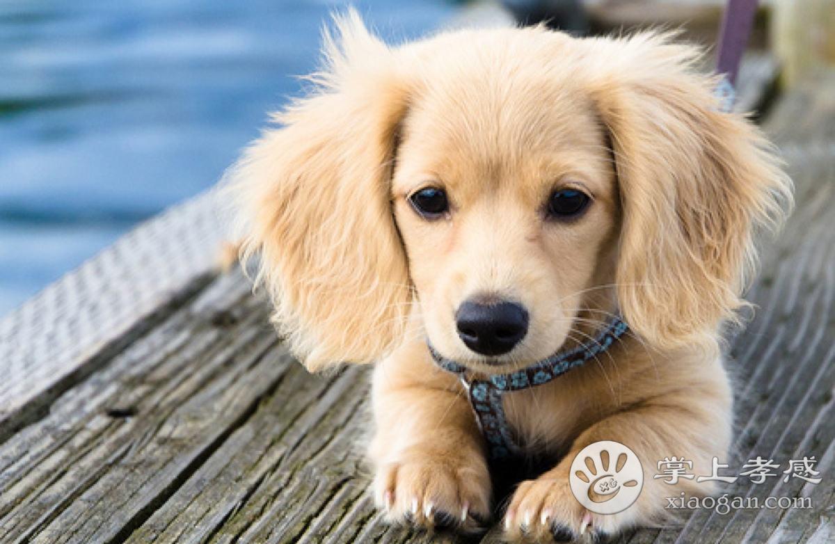 专业训练狗狗各种行为动作等技能