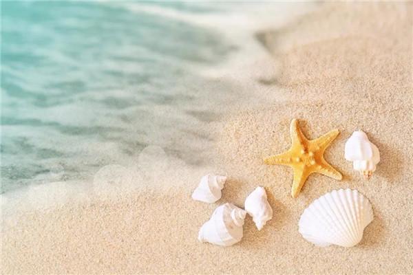 翡翠名都海螺贝壳贴画DIY清凉来袭,名额有限快来报名吧!