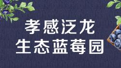 孝感泛龙生态蓝莓园