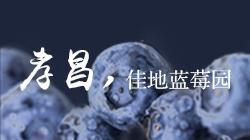 孝昌佳地蓝莓园