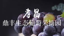 孝昌鼎丰生态葡萄采摘园