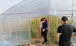 汉川银荷生态采摘园哈密瓜好吃吗?汉川银荷生态采摘园哈密瓜有什么特色