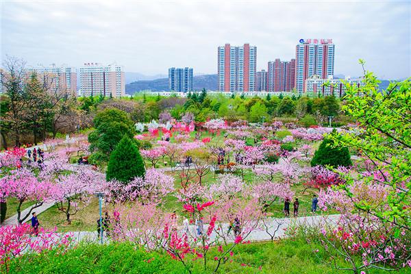 应城景山阳光生态农业园有哪些植物景观园?应城景山阳光生态农业园特色植物景观园介绍