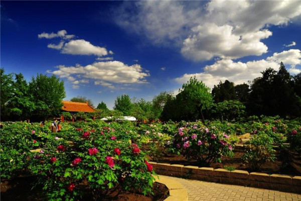 应城景山阳光生态农业园制茶中心好玩吗?应城景山阳光生态农业园制茶中心有什么特色?