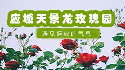 应城天景龙玫瑰园