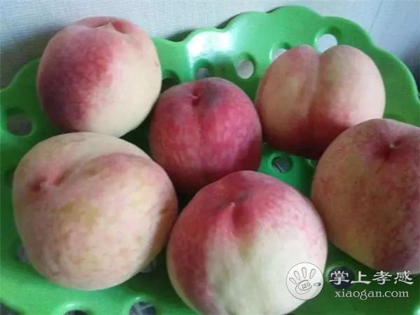 安陆月亮山桃子采摘园桃子怎么样?安陆月亮山桃子采摘园桃子好吃吗?[图1]