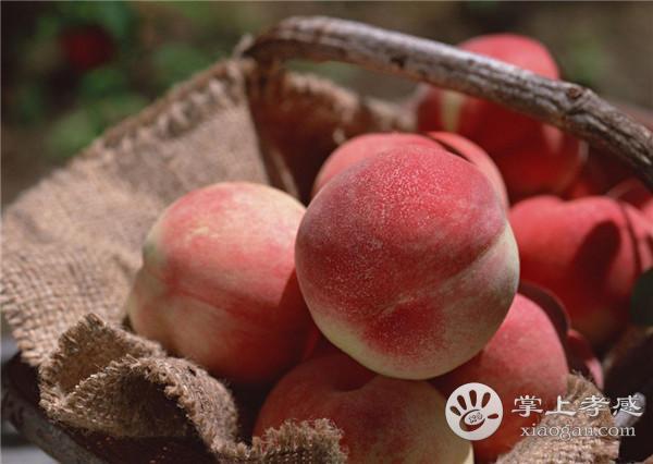 安陆月亮山桃子采摘园桃子怎么样?安陆月亮山桃子采摘园桃子好吃吗?[图2]
