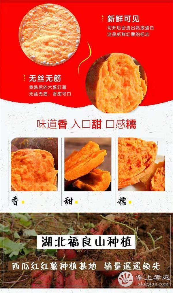 仅需19.9元!抢购福良山5斤红薯(包送到家)!香甜软糯,老少皆宜![图3]