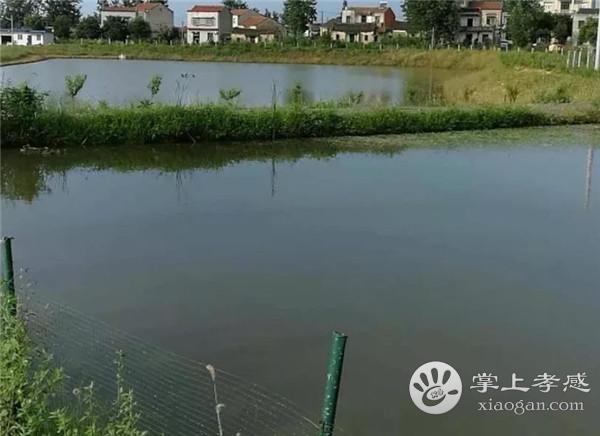 汉川元立生态园环境怎么样?汉川元立生态园环境介绍[图4]