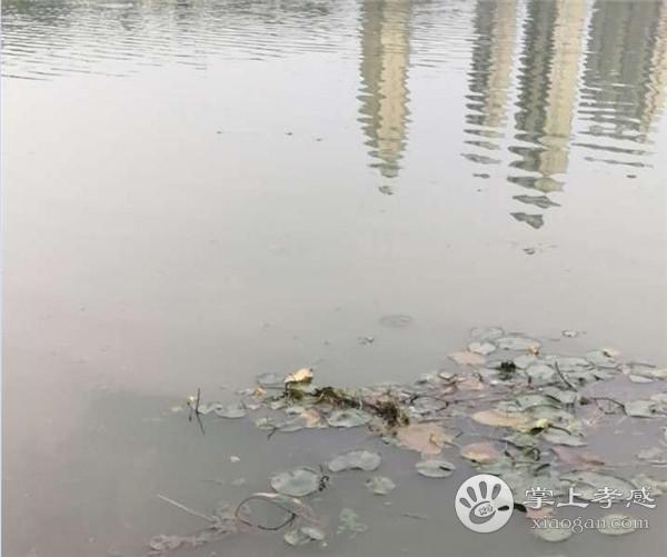 槐荫公园水污染太严重,望市民引起重视![图1]