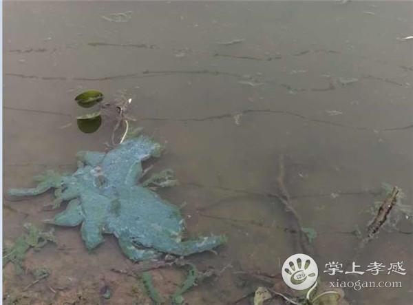 槐荫公园水污染太严重,望市民引起重视![图2]