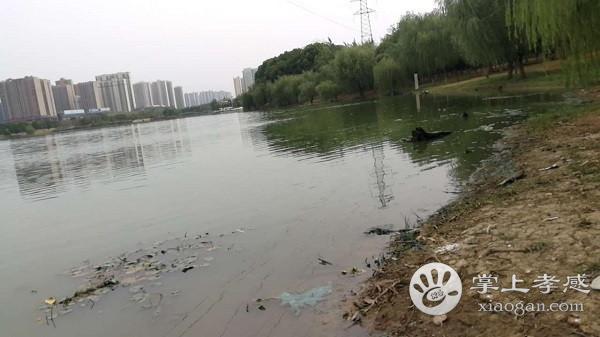 槐荫公园水污染太严重,望市民引起重视![图3]