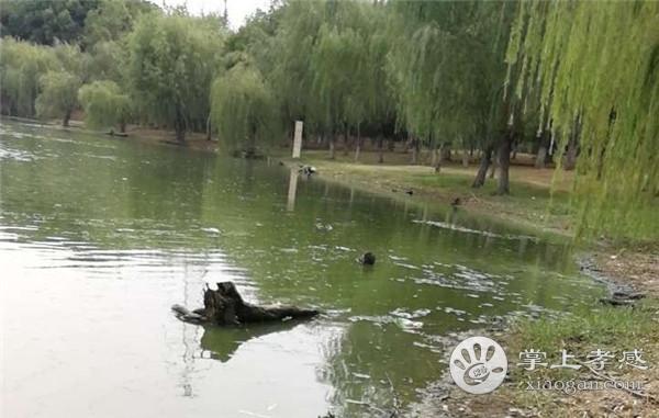 槐荫公园水污染太严重,望市民引起重视![图4]