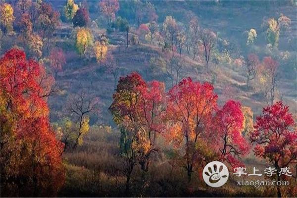 """大悟四姑北山旅游导览图出炉!快到""""乌桕之乡""""大悟赏红叶吧![图5]"""