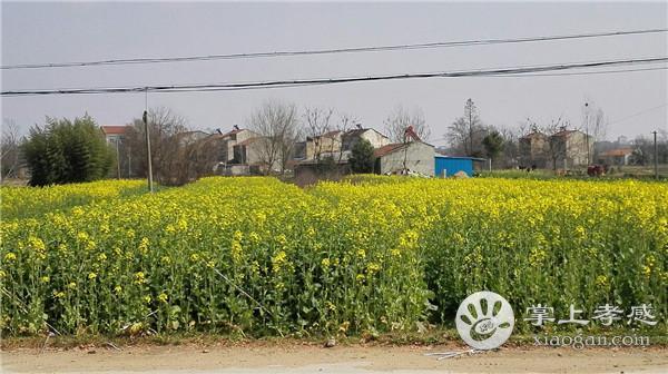 安陆棠棣镇获省级救灾资金12.6万元,346户受灾群众受益[图1]