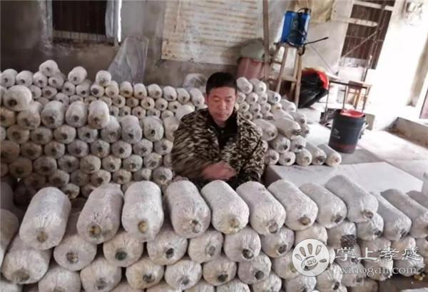 """朱湖""""凤凰哥""""改种蘑菇成网红,上海人也来买蘑菇![图4]"""