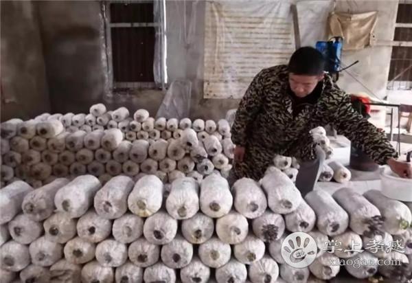"""朱湖""""凤凰哥""""改种蘑菇成网红,上海人也来买蘑菇![图5]"""