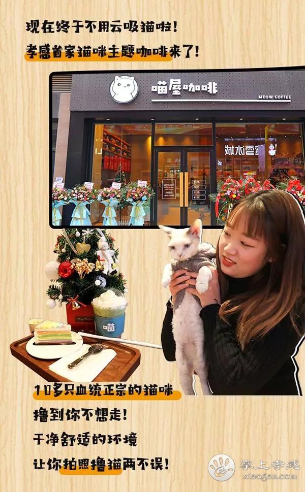 免费送猫咪!孝感首家猫咪主题咖啡屋!10+只血统纯正小猫咪让你撸到爽~[图2]