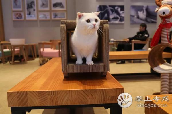免费送猫咪!孝感首家猫咪主题咖啡屋!10+只血统纯正小猫咪让你撸到爽~[图3]