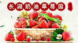 孝感长湖奶油草莓园