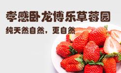 孝感卧龙博乐草莓园