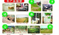 孝感永高农业生态园有哪些农产品?孝感永高农业生态园农产品一览!