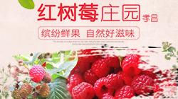 孝昌红树莓庄园