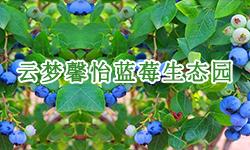 云梦馨怡蓝莓生态园