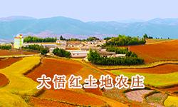 大悟红土地农庄