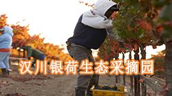 汉川银荷生态采摘园