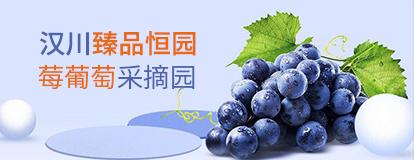 汉川臻品恒园葡萄采摘园