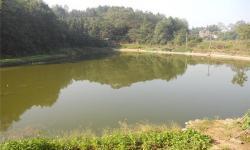 大悟源泉农庄可以钓鱼吗?大悟源泉农庄钓鱼要注意哪些问题?