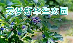 云梦新华生态园